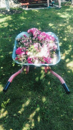 цветы тележка декор розы
