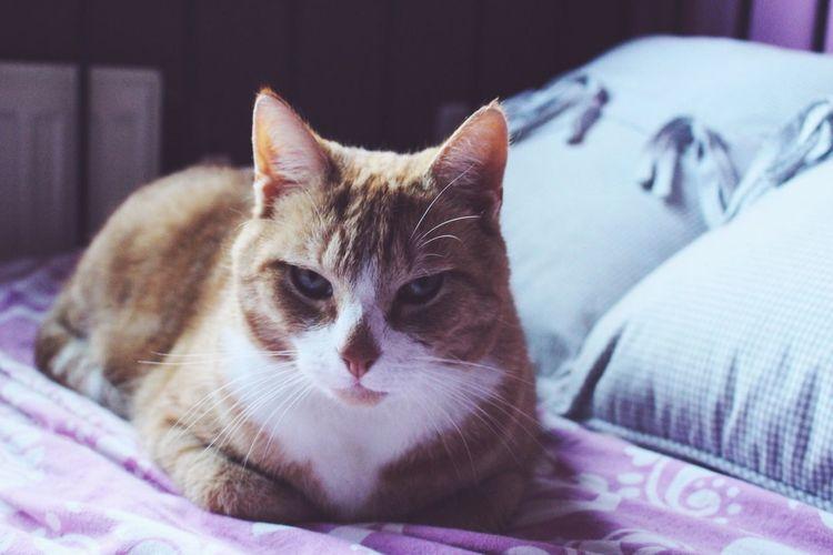 Grumpy morning cat Cats Cat Gingercat
