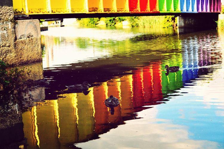 Living under a bridge. Ducks Bridge Colours Colorful