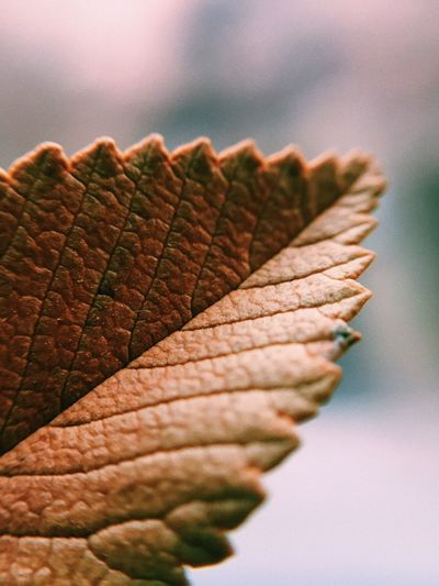 Minimalistic nature. Structure Pattern Minimalism Macro Photography Macro Leaf Plant Plant Part Leaf Nature No People Growth Autumn First Eyeem Photo