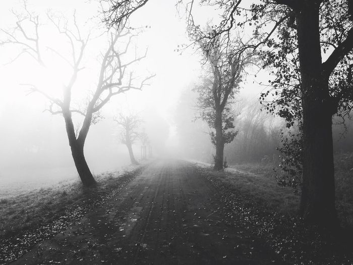 Street amidst trees in foggy weather