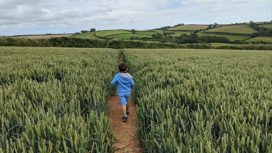 Rear view of boy walking amidst plants