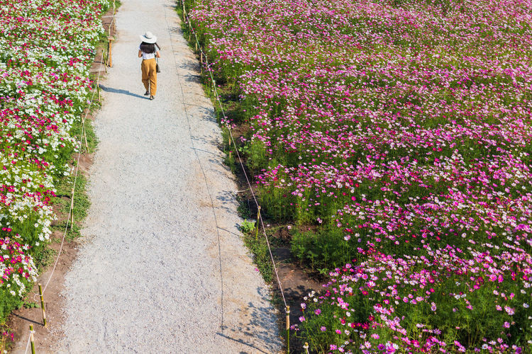 High angle view of person walking on footpath amidst flowering plants