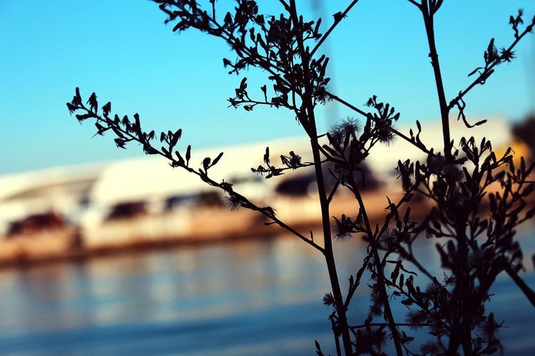 Nature Tree Sky Outdoors No People Day Branch Beauty In Nature Bird Close-up Sea And Sky Sea Life Sea Mer Plantes Fleurs Sauvages Beauty In Nature Nature Rural Scene Flower