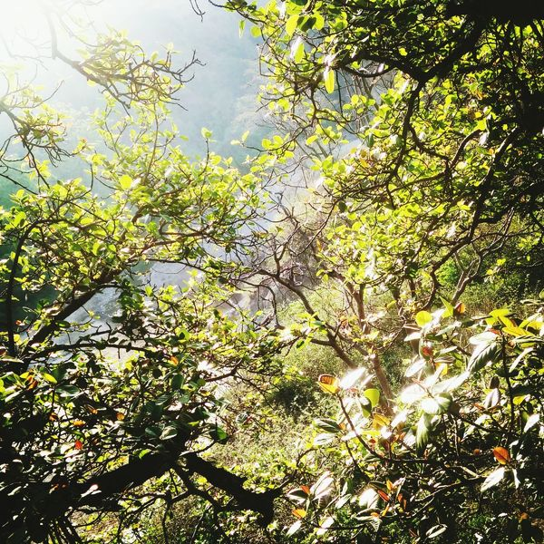 Green leaves gives beauty to the tree Changing The World OpenEdit Trees Green Leaves GREEN LIFE Sun Light