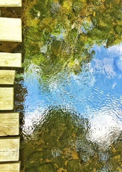 Reflection of plants in water