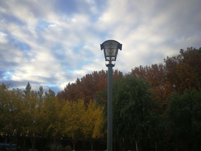 otoño Tree City