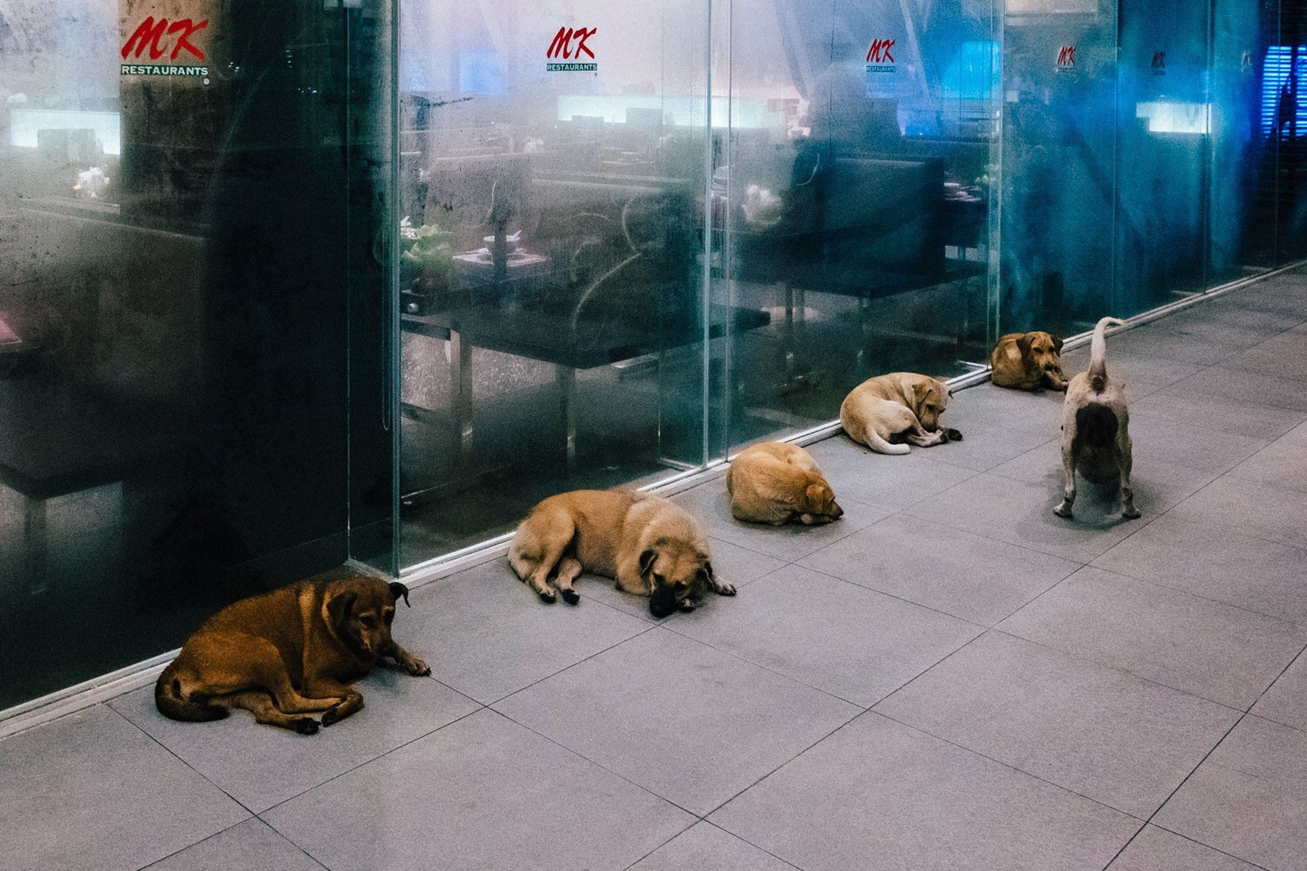 animal themes, transparent, mammal, pets, animal, glass - material, vertebrate, domestic, domestic animals, group of animals, relaxation, lying down, indoors, tile, window, no people, reflection, dog, store, tiled floor, flooring, retail display
