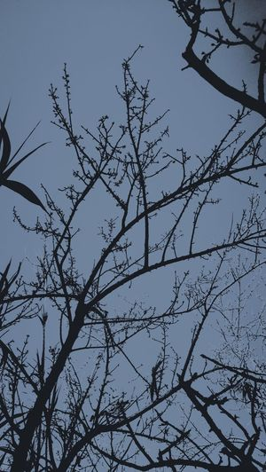 Bird Nature Tree Outdoors Branch Silhouette Low Angle View