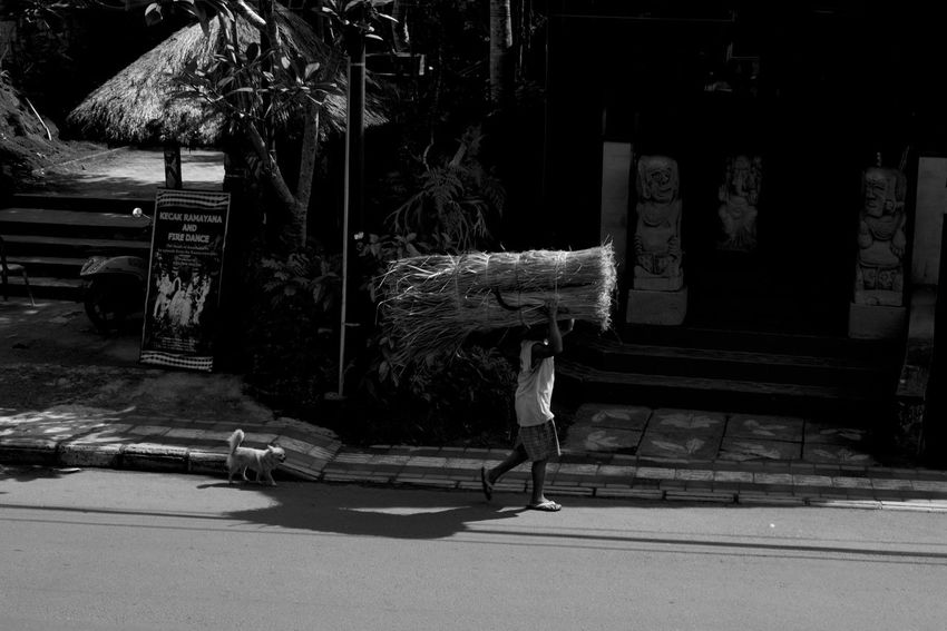ubud is a mood B&w Street Photography Bali Day Dog Farmer Carrying Harvest Full Length INDONESIA Indonesia_photography Lifestyles Man Carrying Large Object One Person Outdoors People Real People Street Dog Street Photography Ubud Ubud, Bali The Street Photographer - 2017 EyeEm Awards