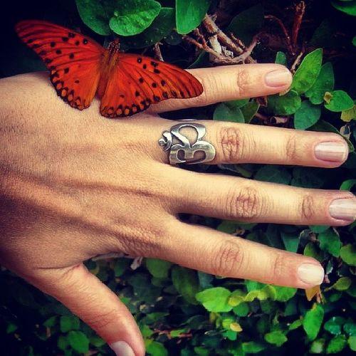 Bom dia viidas! Alegrandomeujardim Prodianascerfeliz Butterfly OM yogainspiration myyoga vidanoolhar eus2fotografia