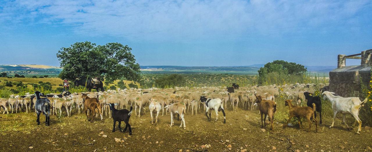 Trashumantes Ovejas Pastores Sierra Segura Sheep Sheeps Sheep🐑 Trashumancia TrashumanciaJaén