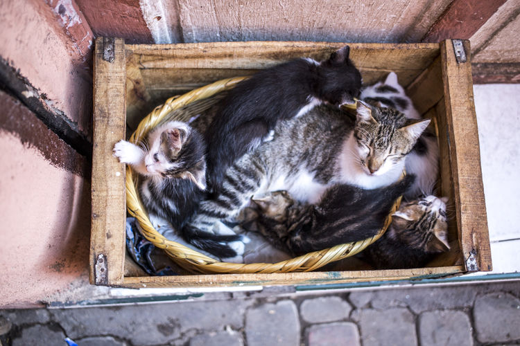Animal Themes Cardboard Box Cats Day Domestic Cat Kitten Marrakech Marrakech Morocco No People Outdoors Pets