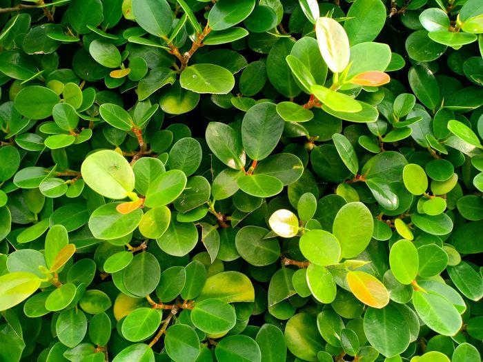 Leaf Leaf Water