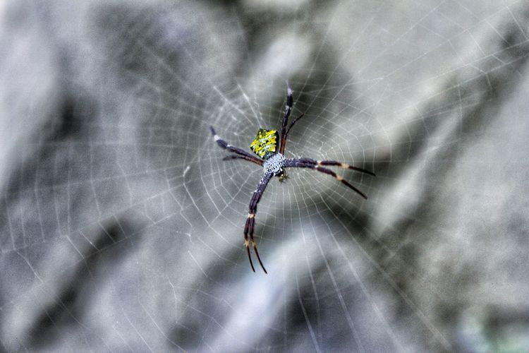 Spider Spider Web Animals Close-up Insect EyeEm Nature Lover EyeEm Indonesia Indonesia_photography
