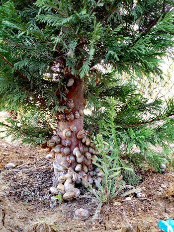 Salyangoz Beauty In Nature Outdoors Snail🐌 Snail Snails Snail Collection Snails🐌 Snail Photography Snailhouse
