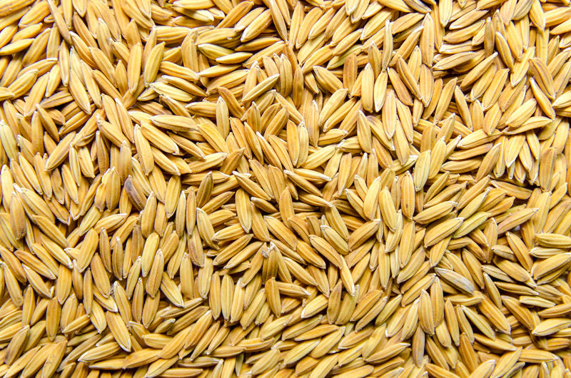 Top view of paddy rice and rice seed on the floor, Background and wallpaper by pile of paddy rice seed, Close-up of brown rice grain. Paddy Raw Rice Rice Paddy Background Backgrounds Brown Close-up Food Food And Drink Grain Healthy Eating Ingredient Material Materials Paddy Field Pile Plant Raw Food Rice Field Seed Wallpaper Wallpapers