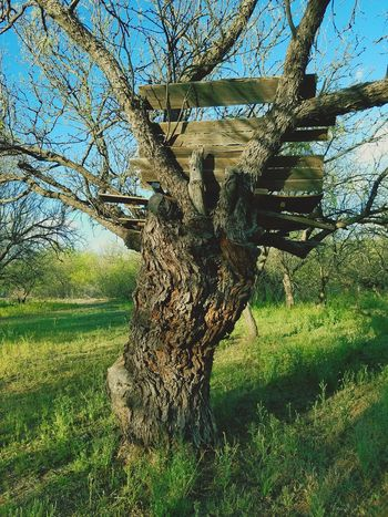 Memories Mesquite Mesquite Trees Old Growth Spring 2017 Forgotten Place Tree House Beauty In Nature Outdoors No People Tree Nature Sky Growth Sunlight Day Low Angle View Beauty In Nature Close-up Catalina Arizona Grass Branch Tree