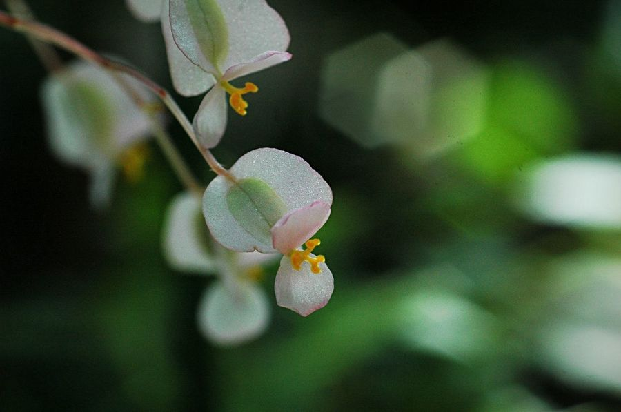 Pastel Power Bokeheffect Bokeh Macro Flower Collection Flowers Colors EyeEm Nature Lover Petal EyeEm Flower Fleshyplants