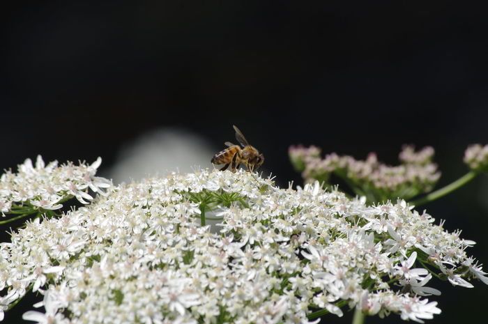 there I was minding my own business collecting nectar to take back to the hive!🙄🙄🤔 Nature Nature_collection Beauty In Nature Hedge Row Beauty Flower Insect Perching Animal Themes Close-up Plant Honey Bee Symbiotic Relationship Buzzing Pollination Bee