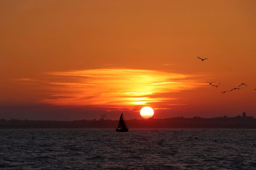 Sunset Sky Water Orange Color Sea Beauty In Nature Silhouette Nature Tranquil Scene Animal Themes Animals In The Wild Sun Transportation Flying Scenics - Nature Horizon Over Water Animal Tranquility Vertebrate Bird