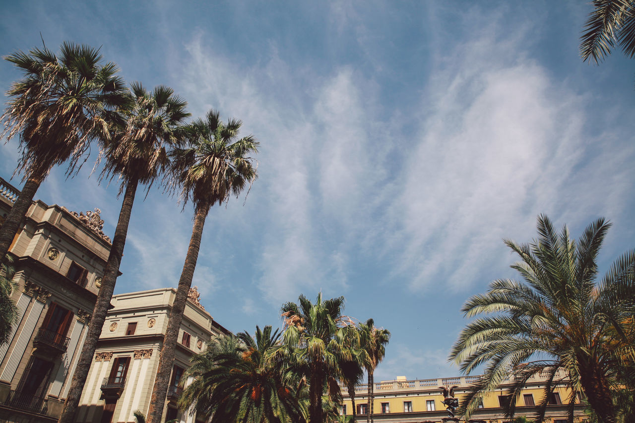 palm tree, tree, architecture, built structure, low angle view, building exterior, sky, day, growth, no people, outdoors