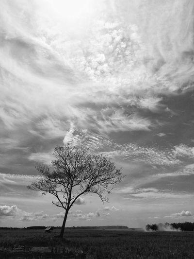 Lonely tree The