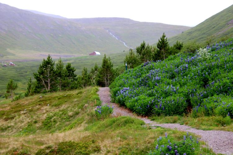 Island Berg