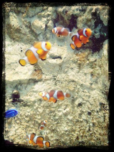 Aujourd'hui on a vu Némo ! Aquarium La Rochelle