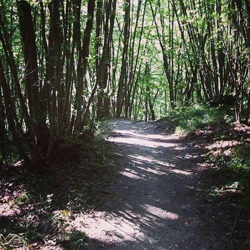 Forest Mountain Apeninoreggiano
