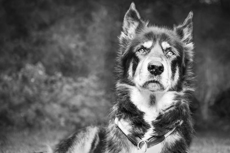 Black And White Dog Picoftheday The Portraitist - 2014 EyeEm Awards