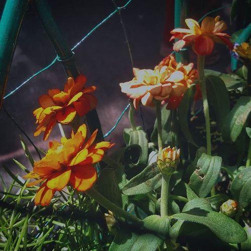 Flowers Kalaghodafestival2016 Kalaghodafestival Mumbai Maharshtra Maharashtra_ig Insta_maharashtra Flower Mobilephotographyph Mobile_perfection Mobilecamera Samsunggalaxygrand2 Mobilephotographer Mobilephotography