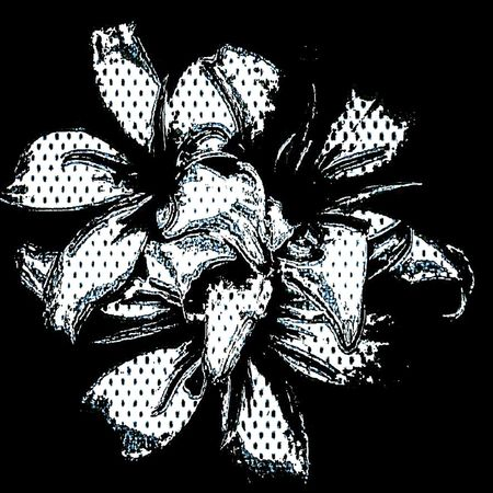 White lilyz xxxxxxx Nefilian Xxxxxxx Abstract Flowers Black And White Lilys X