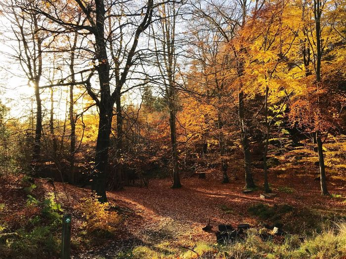 Autumn Days England Countryside England United Kingdom Chopwell Woods Autumn Tree Change Tranquility Nature Tranquil Scene Beauty In Nature Scenics Leaf Outdoors No People Non-urban Scene WoodLand Forest EyeEmNewHere