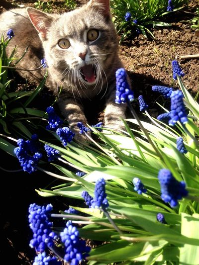киса в шоке 😵 моикотики правятМиром!!!Pets
