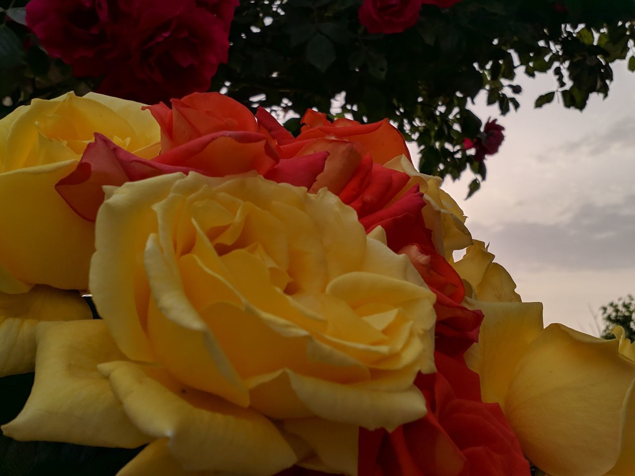 CLOSE-UP OF ROSE BOUQUET AGAINST SKY