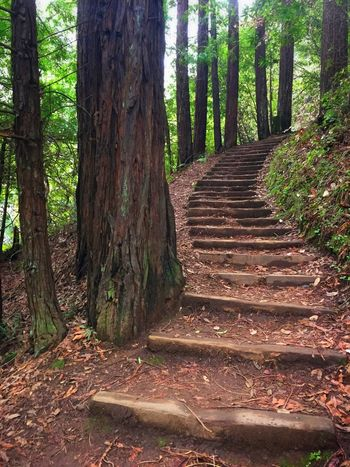 Redwood Stairway Stairway Stairways Stairs Redwoods Trees Natural Stairs On The Trail Redwood Trees Curving Stairway Stairway To Heaven Stairway To Light Stairway To The Trees Natural Stairway Nature Nature On Your Doorstep Nature Photography Hello World Enjoying Life On A Hike Phoenix Lake Marin Marin County Marin County CA Steps And Staircases Steps