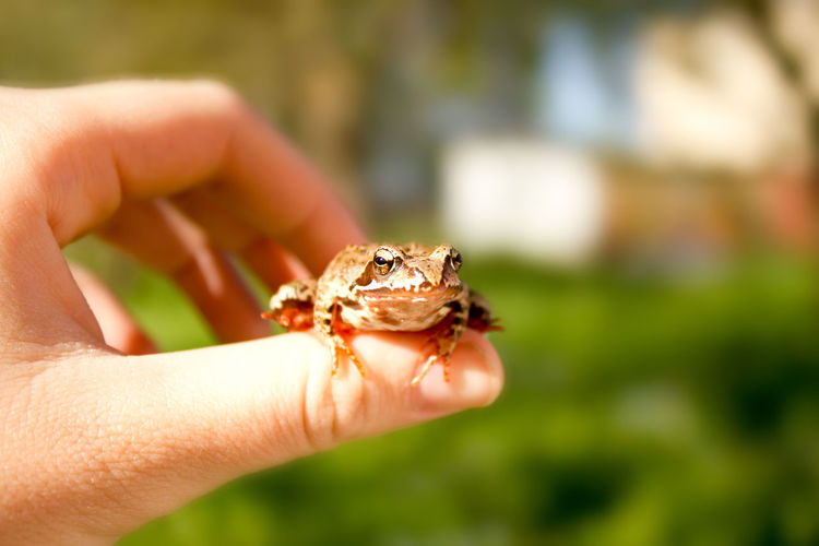 Close-up of hand holding frog outdoors