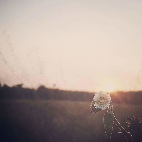 Beautifulflower  Flower Collection Twilight Sunrise_sunsets_aroundworld