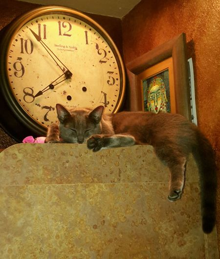 midnight cat resting.