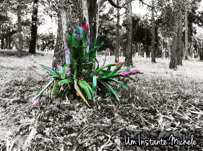Uminstantemichele Mobilephotography Mobgraphia Flower P&B