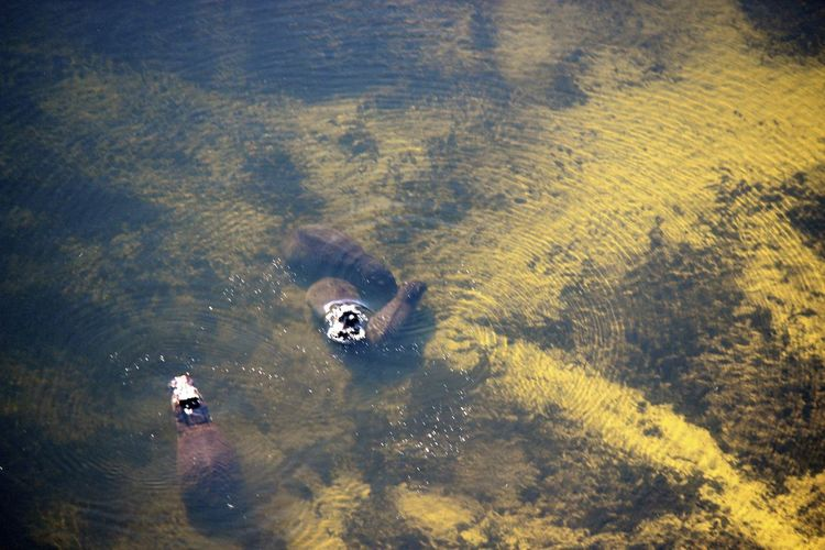 High angle view of animals swimming in lake