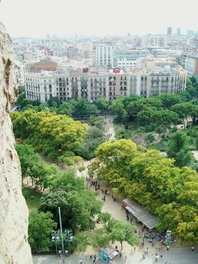 High Angle View Green Color Tree Building Exterior Ornamental Garden Built Structure Cityscape Sky Spain♥ Barcelona View