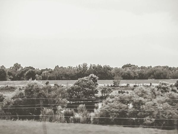 Black And White Black And White Photography Nature Photography Nature_collection Pastures Overflow Pond Trees And Sky Trees And Bushes Falling Trees Brush And Bushes Open Edit The Week On EyeEm new photo made to look old