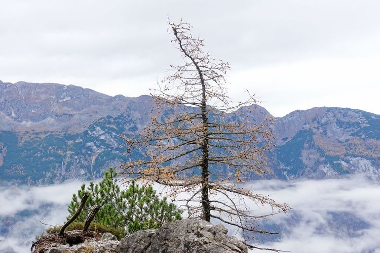 Mountain Sky Plant Tree Beauty In Nature Nature Scenics - Nature Mountain Range Cold Temperature