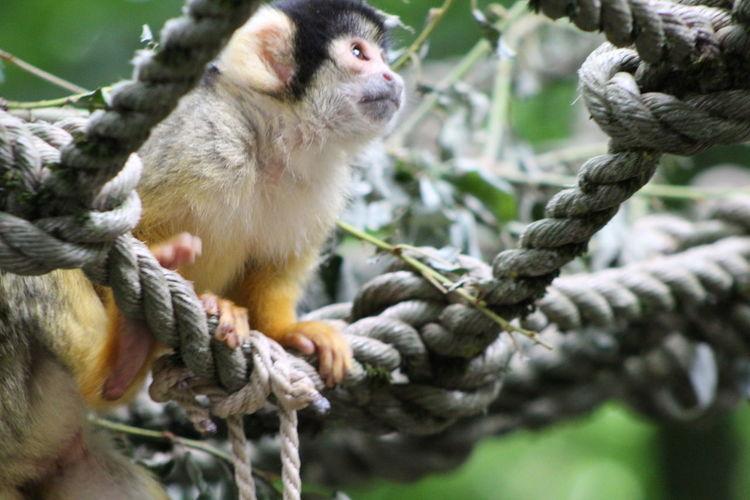 Canon1300d Canon EyeEm Nature Lover EyeEm Gallery Green Fall GAIAZOO-KERKRADE Nature Zoo EyeEmNewHere Strength Rope Close-up Monkey Autumn Mood