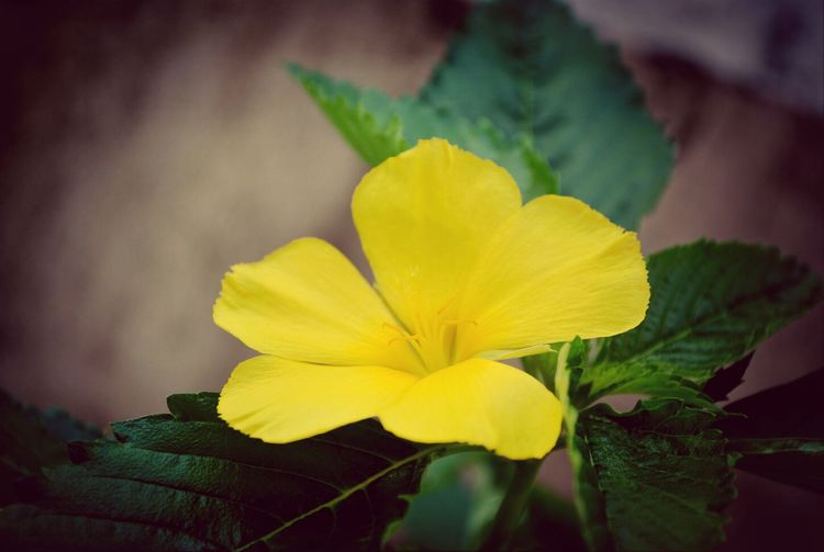 I don't know what's the name of this flower but seeing it everymorning is such wonderful thing. Flowers EyeEm Nature Lover Yellow Flower Goodmorning EyeEm