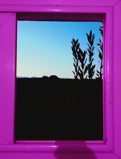 Window Plant Morning Toiletwindow Perple Tunisia GoodMorning⛅ Good Morning EyeEm Best Shots PhonePhotography