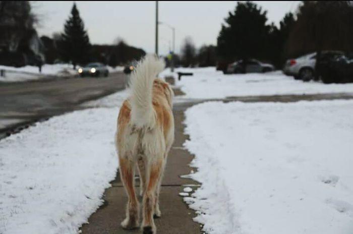 Walkimg towards freedom EyeEm Animal Lover Lonelyroad Doglife