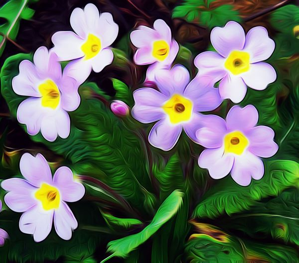 Flower Freshness Petal Fragility Flower Head Close-up Green Color Purple Outdoors Beauty In Nature Nature Nature On Your Doorstep Polyantha